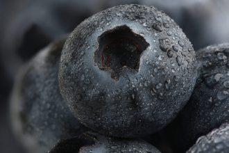 Borówka czernica (czarna jagoda)